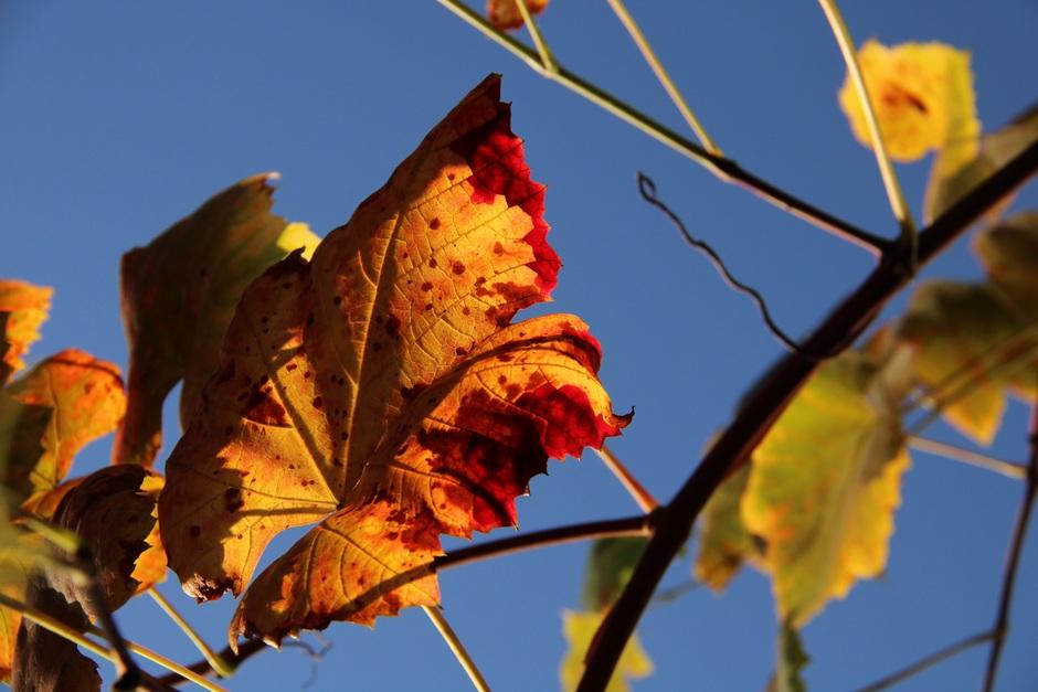 Herfstkleuren en blauw