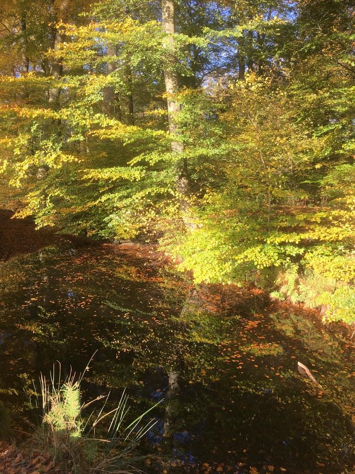 Spiegeling van herfstkleuren