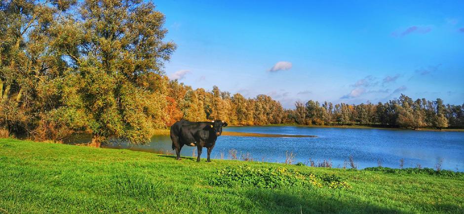 Mooie dag in de polder