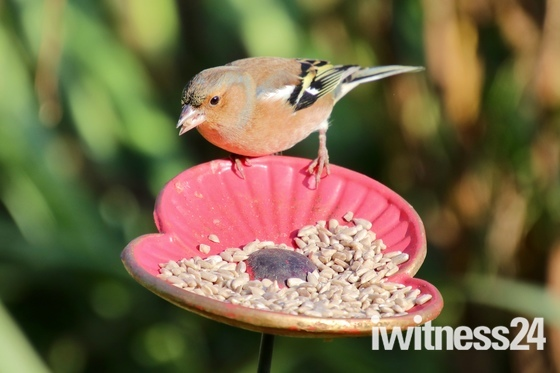 Poppy feeder visitors