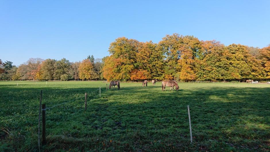 Weerfoto - herfstkleuren aan de rand van het panbos