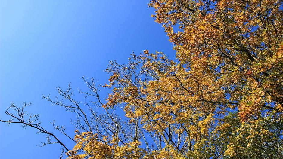 Mooie herfstkleuren en prachtige, knalblauwe lucht