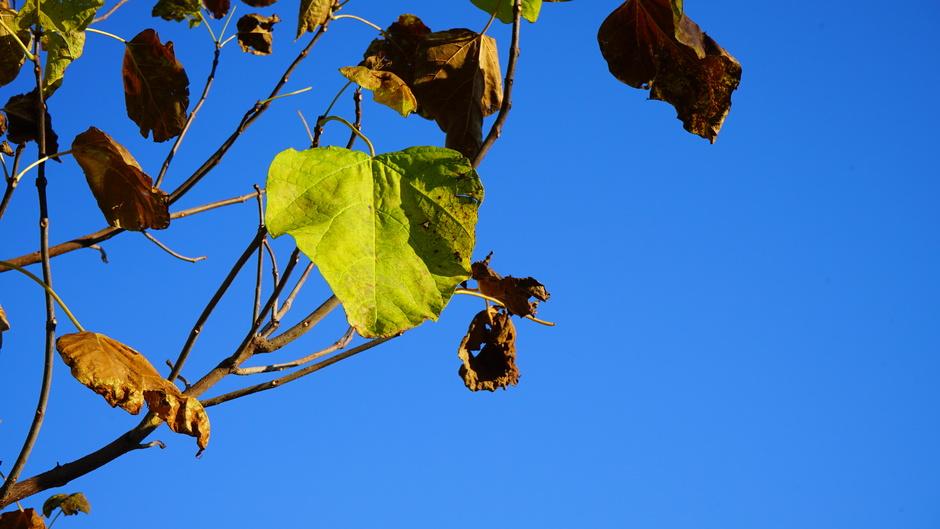 Zon en blauwe luchten