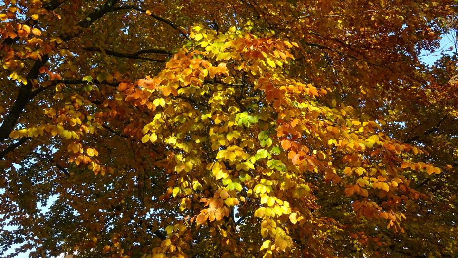 Mooie herfstbladeren in de natuur