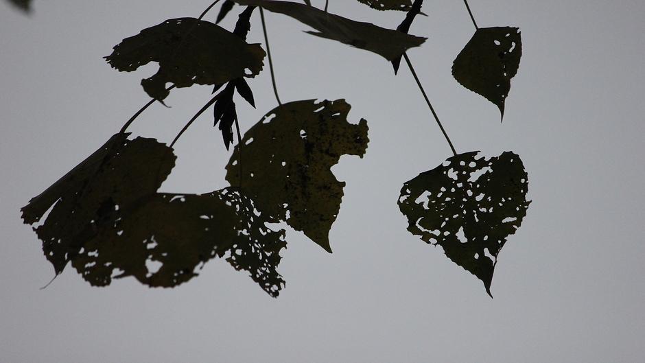 Veel wind en regen, bladeren geven 'doorkijkje' naar grijze lucht