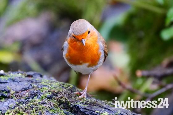 Wildlife at Lackford Lakes in November