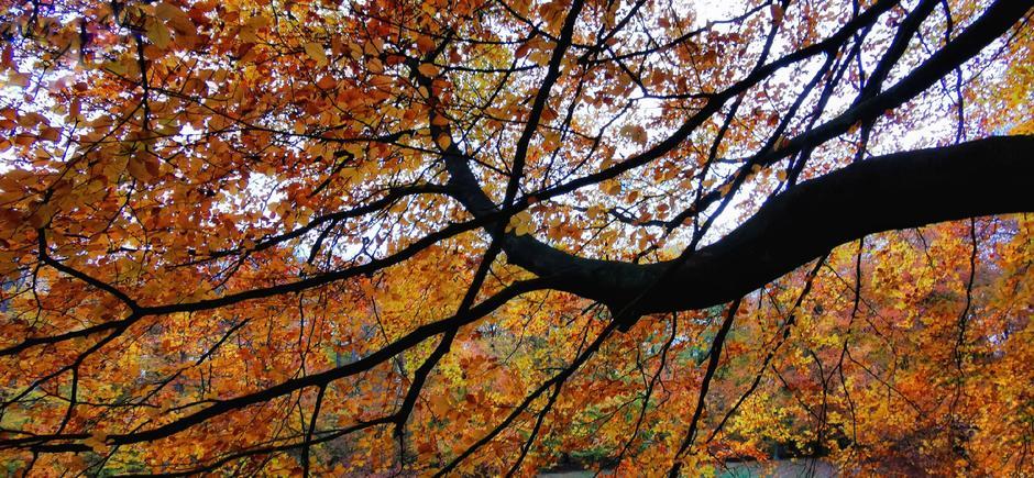 Grijs, nat en donker maar toch kleurrijk in het bos vandaag