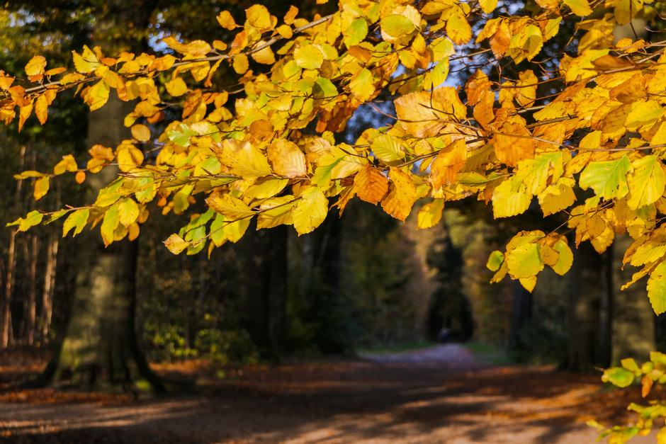 Herfst (7)