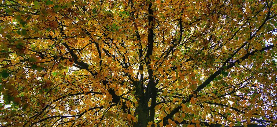 Nog even genieten van de laatste herfstkleuren