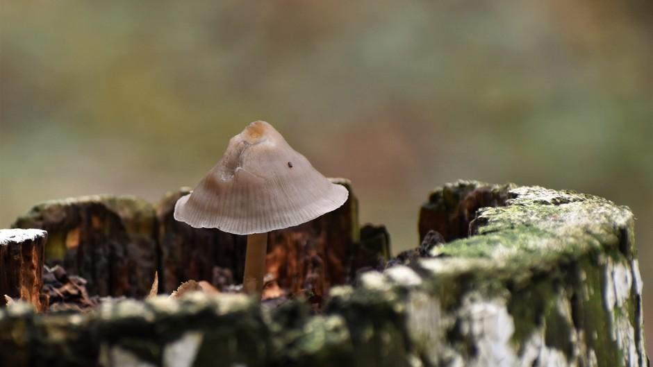 Herfst en paddenstoelen