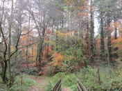 Late autumn colours at Holyford Woods Nature Reserve