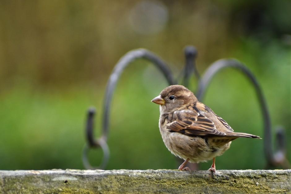 Het is weer tijd om de vogeltjes te voeren