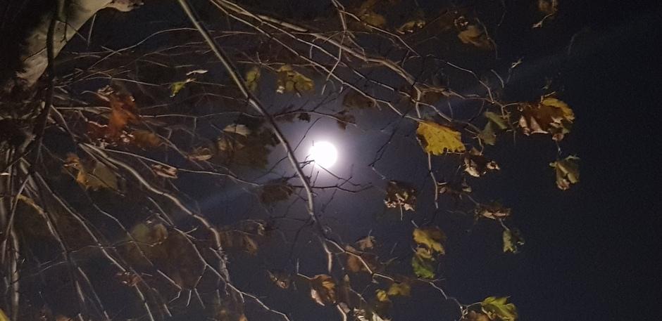 Zie de maan schijnt door de bomen....