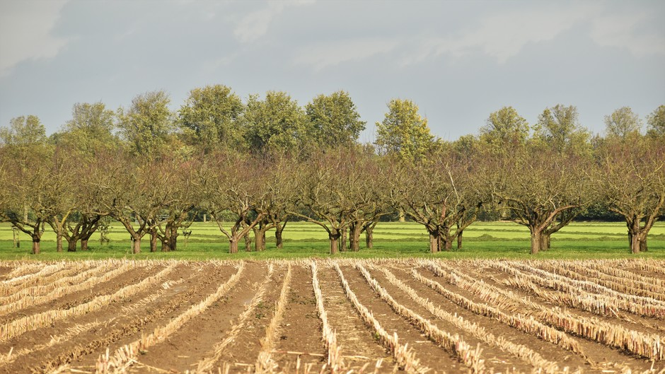 Kale bomen en bomen nog volop in het blad, klimaatverandering?