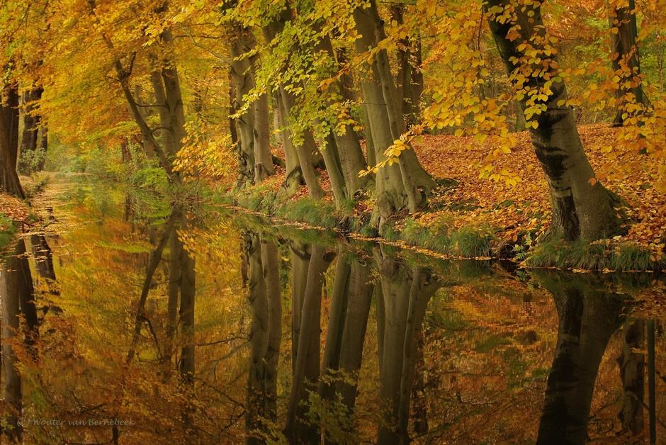 Herfst met reflectie