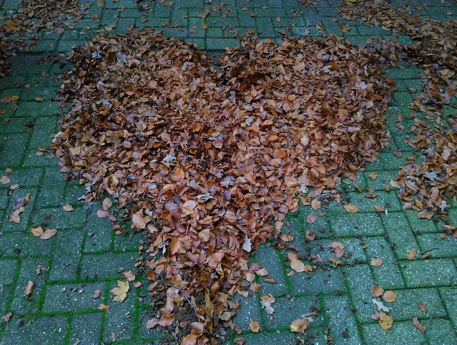 Blad, blad, bladeren