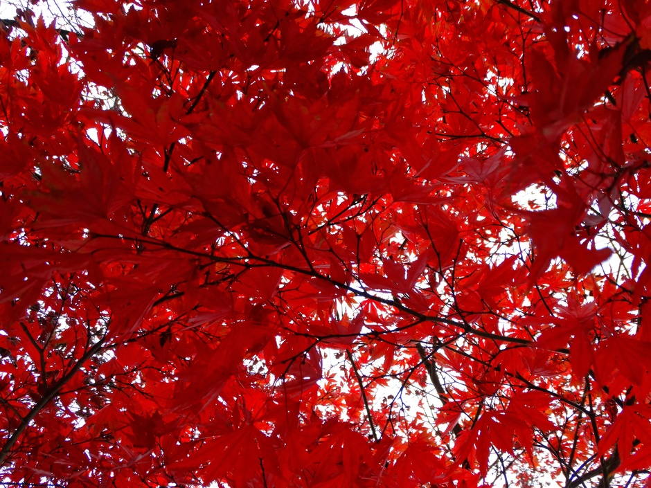 Vandaag is het rood!