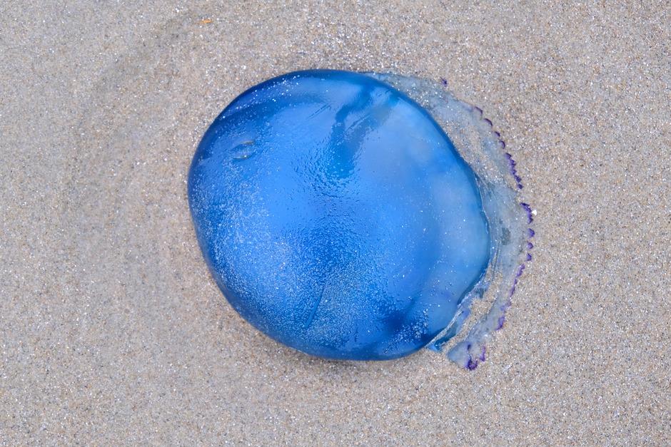 zandblauwtje
