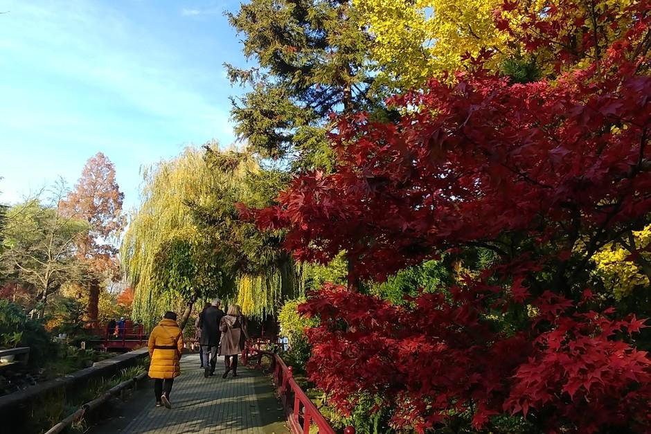 Mooie herfstkleuren en schitterend weer vandaag