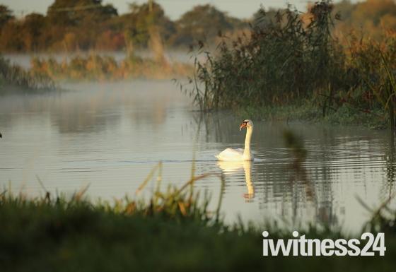 A walk beside the river Waveney. Challenge.