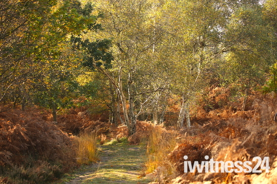 Autumn walks. Dunwich heath.
