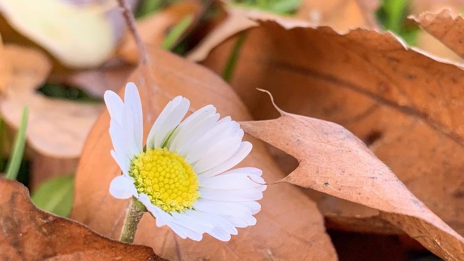 Voorjaar in herfsttooi