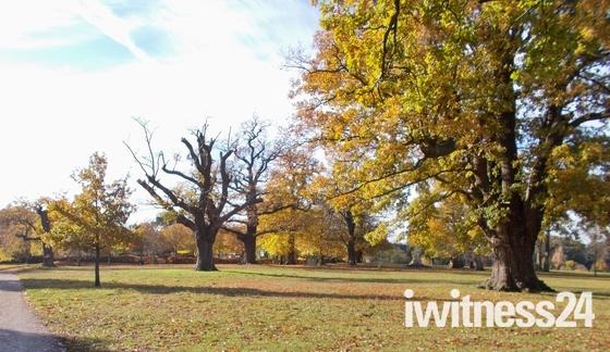 Autumn colours Christchurch Park