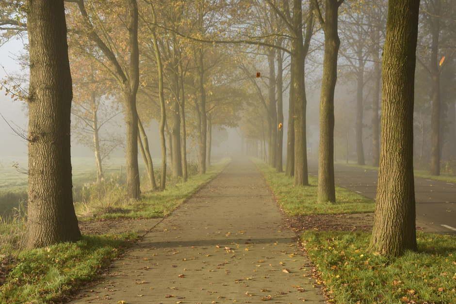Vallende bladeren in de mist.