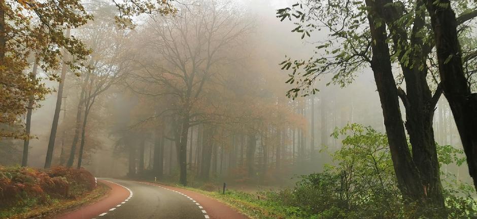 Mistig in het bos vanmiddag