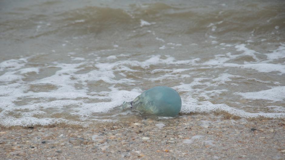 Zandvoort 231119