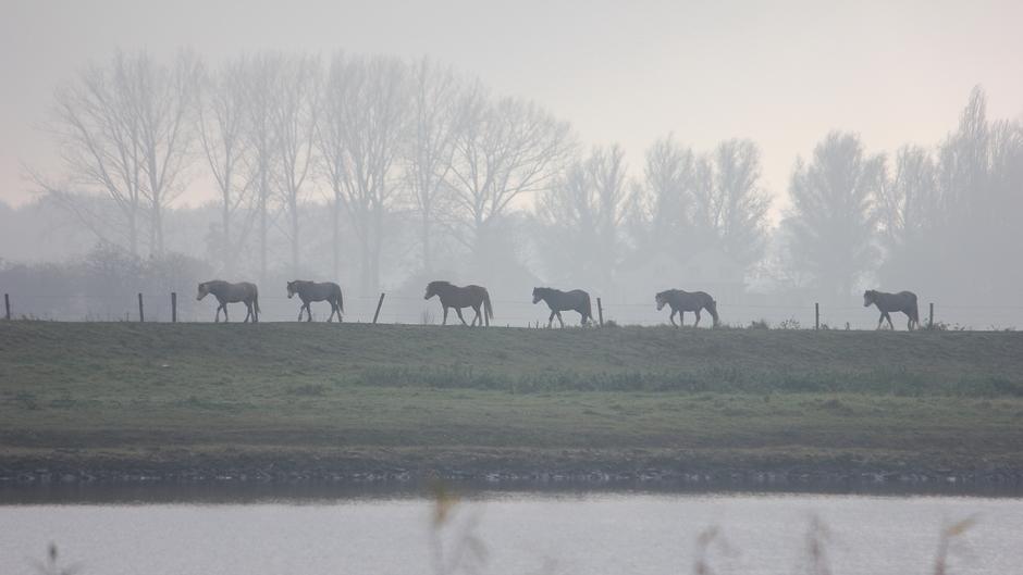 Het bleef lang heiig langs de Lek / paarden stapvoets op de dijk