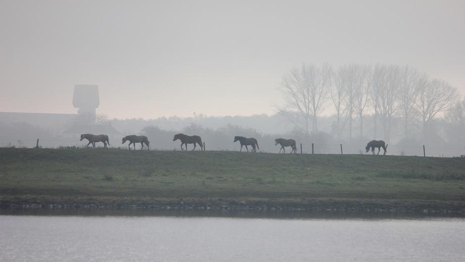Het bleef lang heiig, vooral bij het water (de Lek) / paarden stapvoets over de dijk