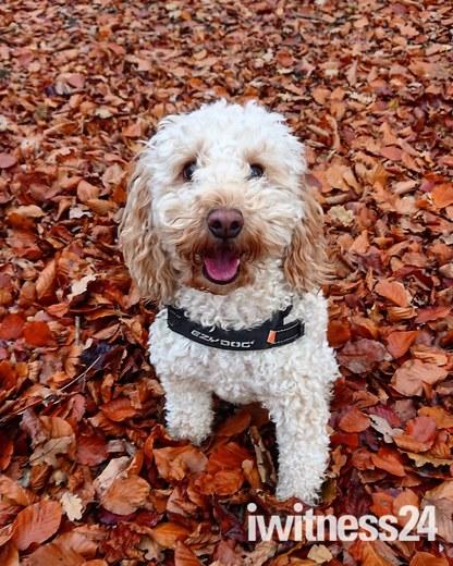 Autumnal puppy