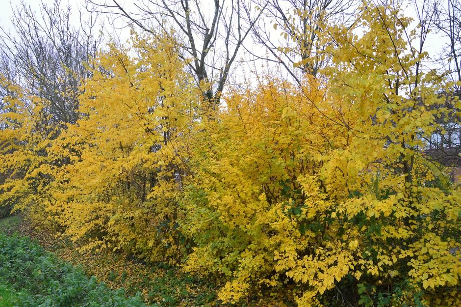 Een gele herfstkleur