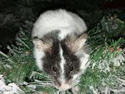 george the christmas hamster