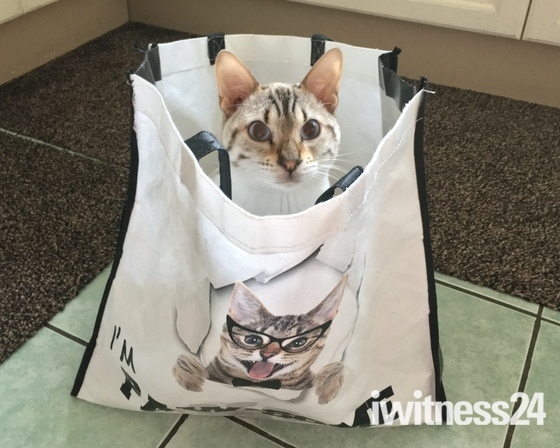 Don't let the cat out the bag! :-)