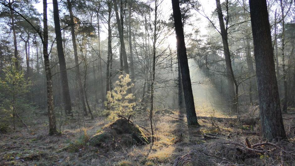 eerbetoon aan de dennenboom op voetstuk in het bos