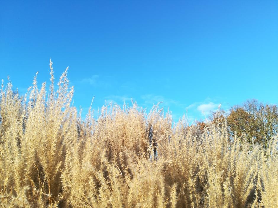 IJsblauwe lucht vandaag