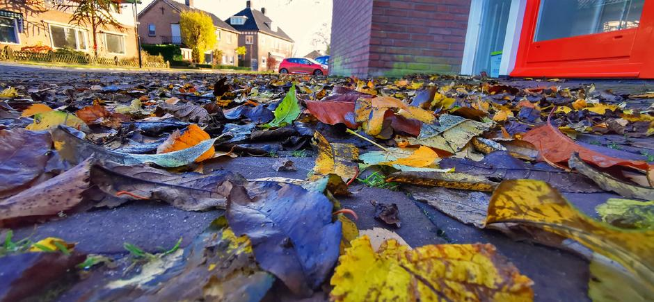 Het meeste blad is nu van de bomen af