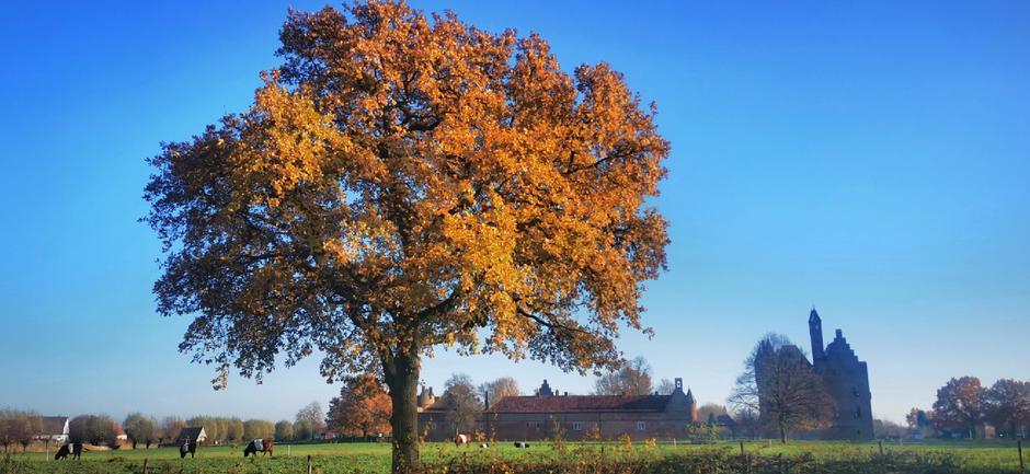 Sommige bomen houden het nog wat langer vol