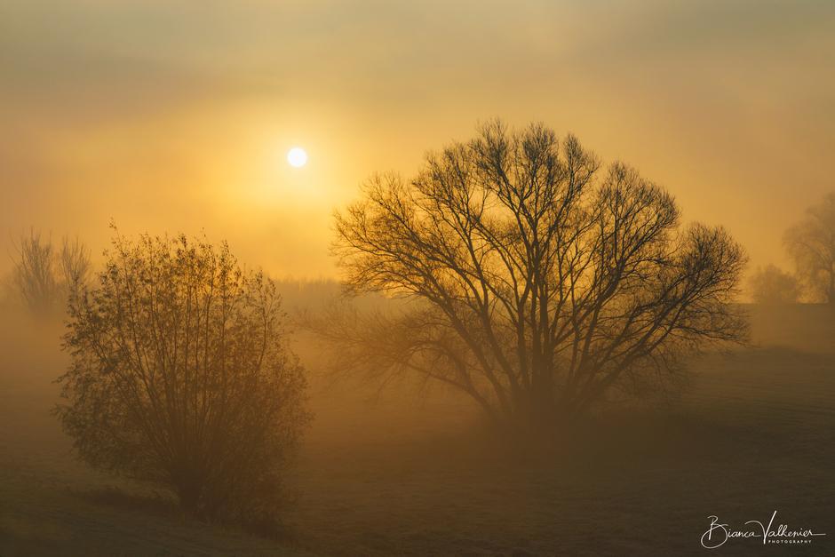 Mistige, koude  ochtend in de Betuwe
