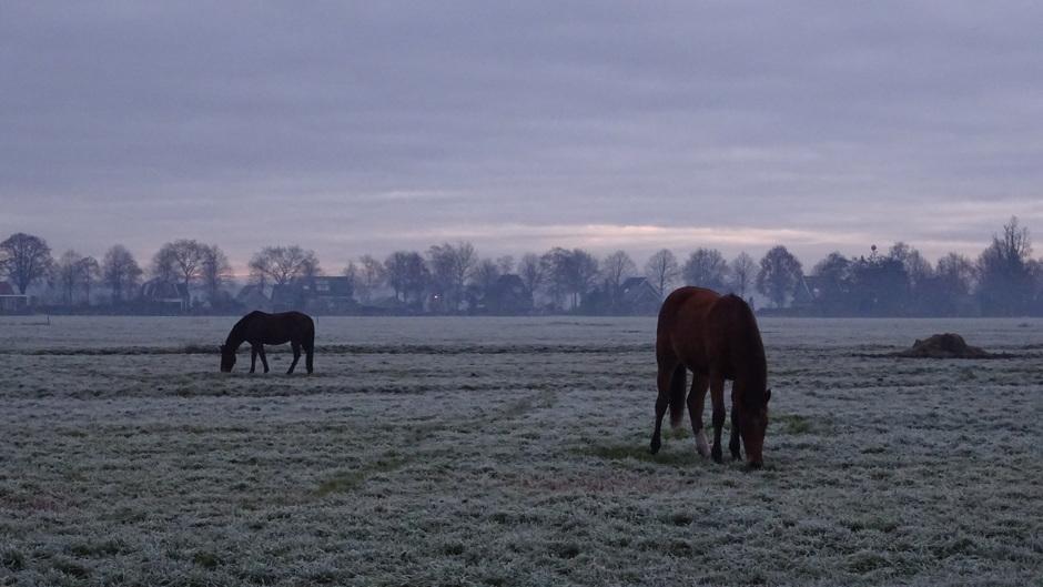 Berijpte weilanden met paarden
