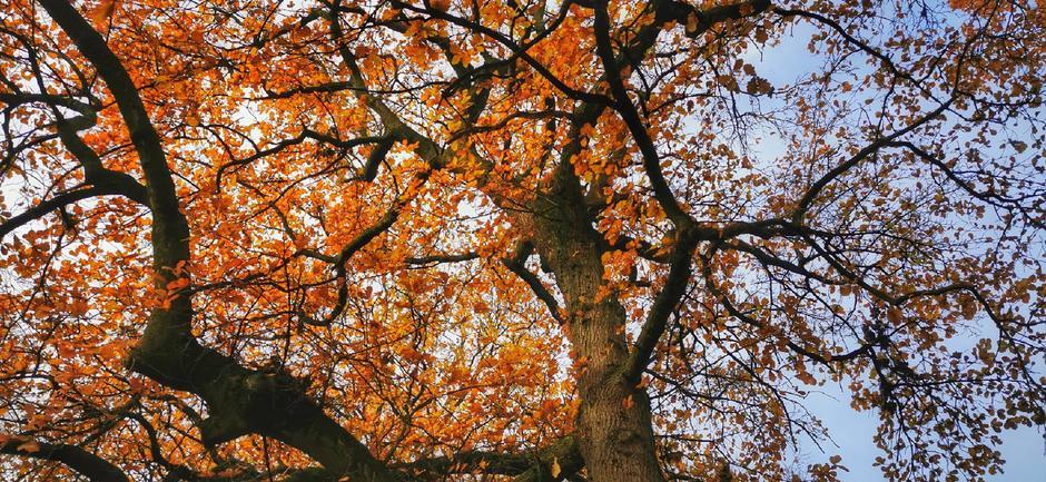 Veel blad nog aan de bomen