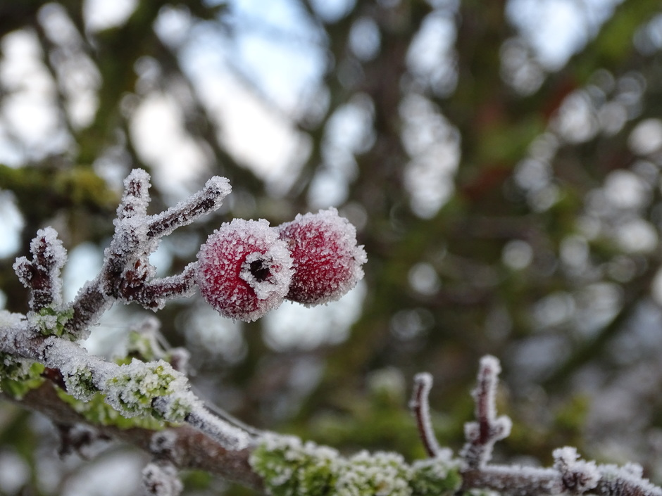 winters sfeertje