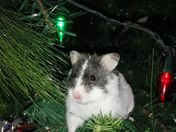 george the hamster chistmas tree