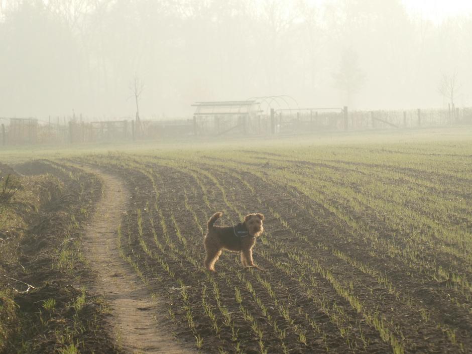 Mist nog over de velden, zon komt.
