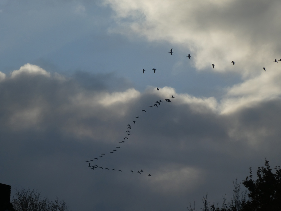 Trekvogels onderweg.