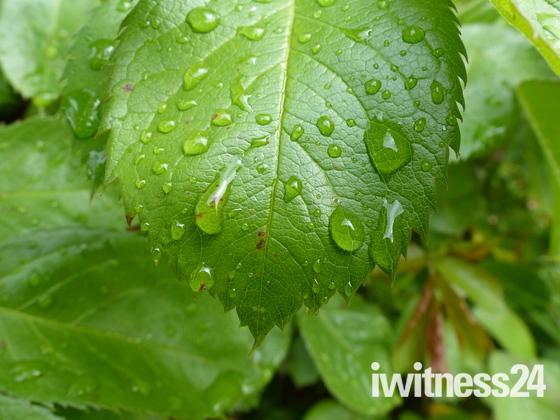 PROJECT 52, RAIN, DROPLETS