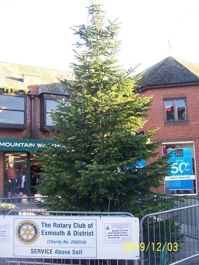 Christmas tree in Magnolia Square