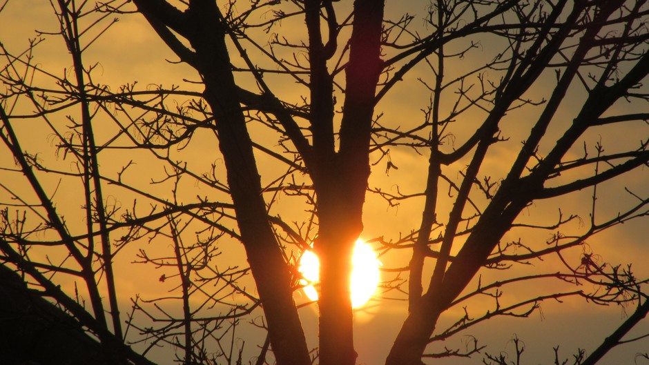 Zon achter de inmiddels kale boom